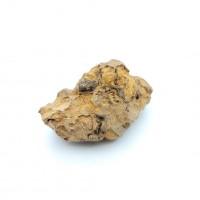 圖示-恐龍糞便(Coprolite)