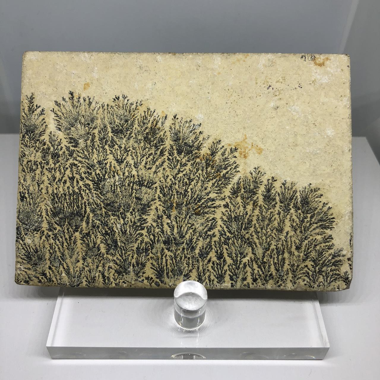 圖示-氧化錳樹枝石(Manganese Dendrites)