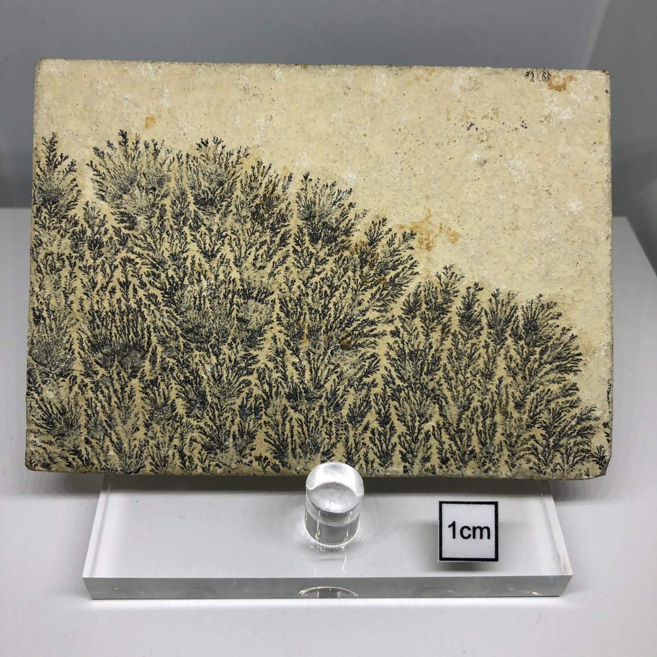 氧化錳樹枝石(Manganese Dendrites)