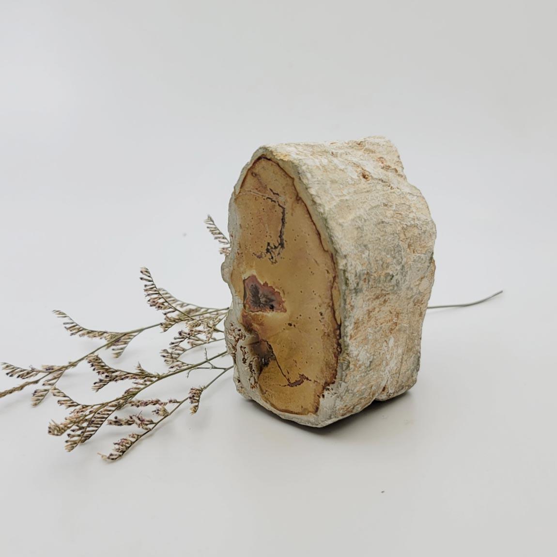 圖示-矽化木化石(Petrified Wood)