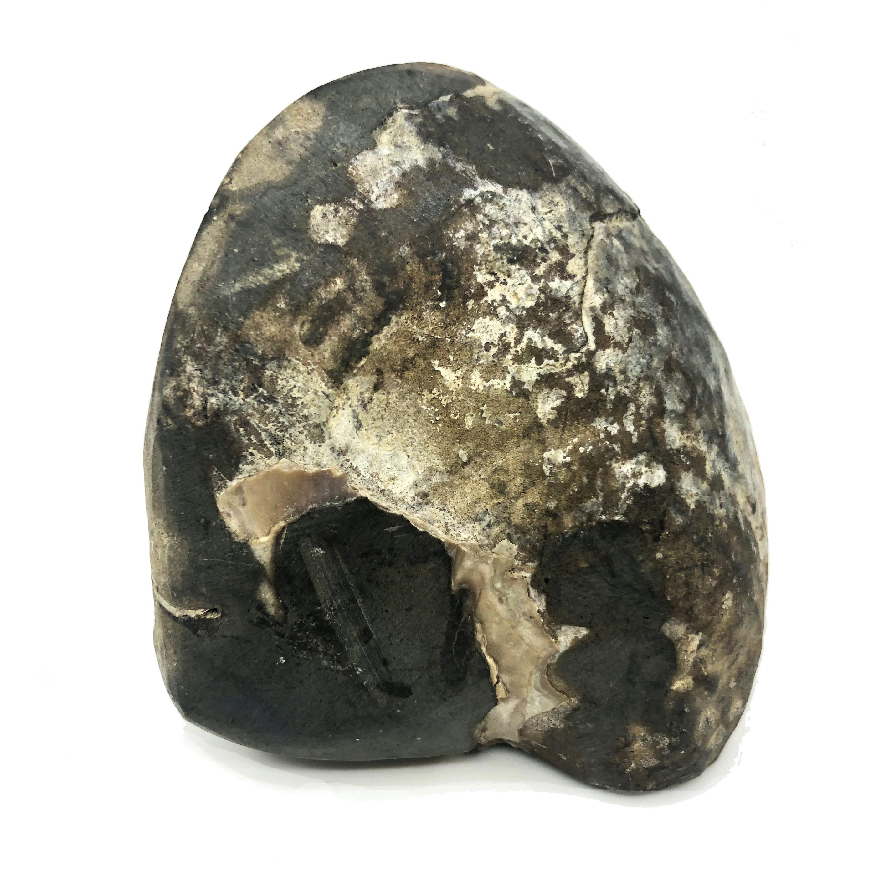 圖示-貝化石(Seashell Fossil)